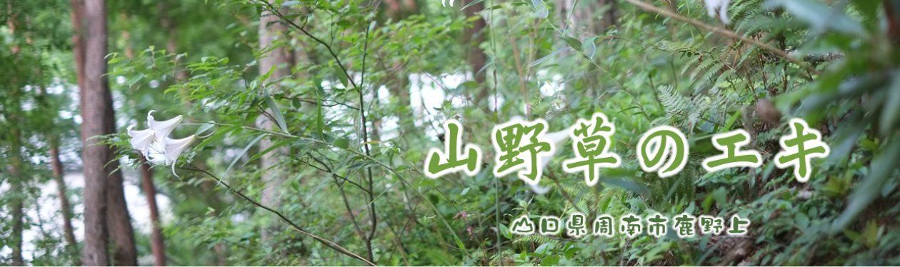 山野草のエキ