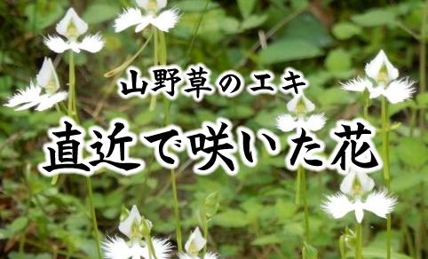 直近で咲いた花