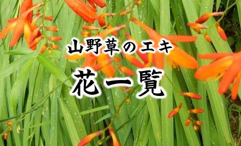山野草のエキ 花一覧